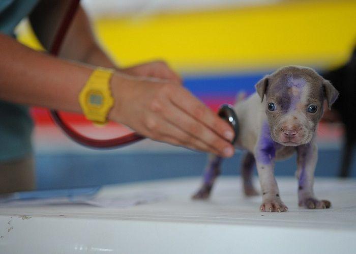 exmen medical chien