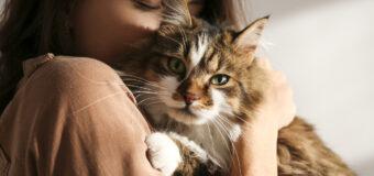 6 faits insolites sur les chats