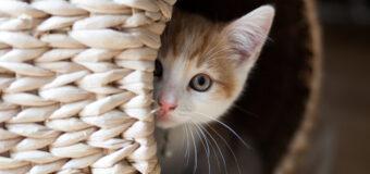 Pourquoi les chats aiment-ils se cacher ?
