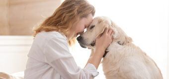 Assurance pour animaux : comment fonctionnent les remboursements ?
