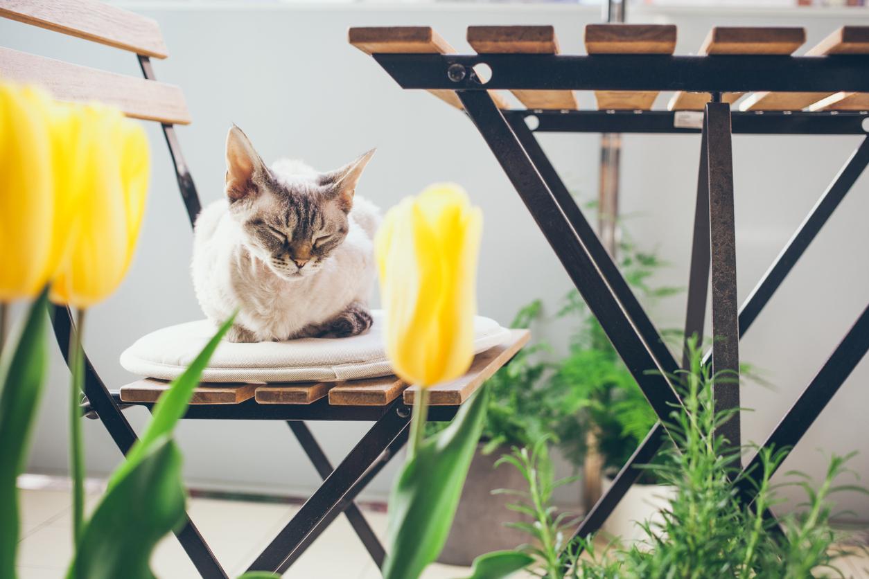 un chat sur une chaise de jardin