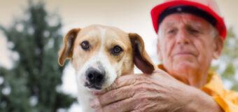 Comment protéger votre animal des accidents domestiques ?